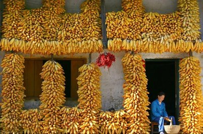 banana house2